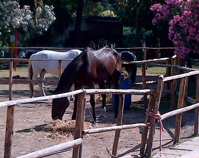 Allevamento Cavallo Salernitano